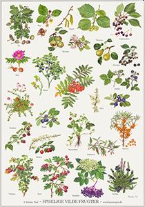 plakat spiselige blomster